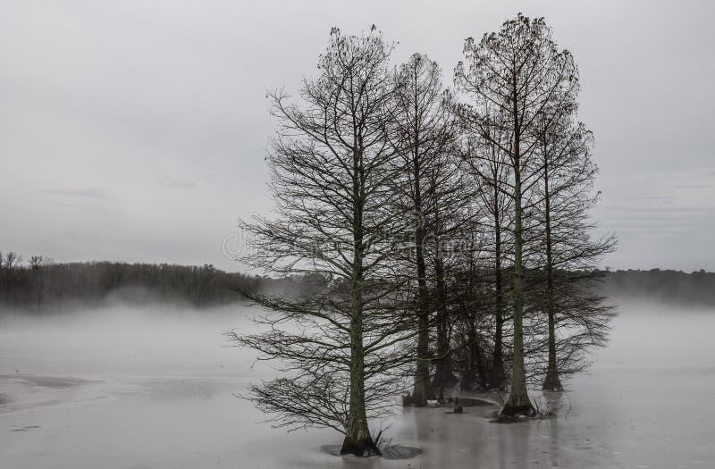 Árvores de Cypress na névoa e no gelo foto de stock royalty free