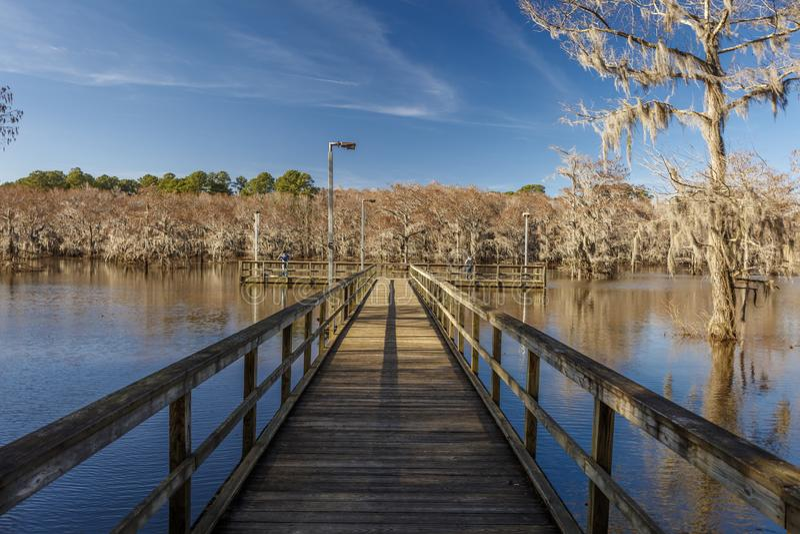 Árvores de Cypress no parque estadual do lago Caddo, Texas oriental perto de Louisiana Espanhol, pântano fotos de stock royalty free
