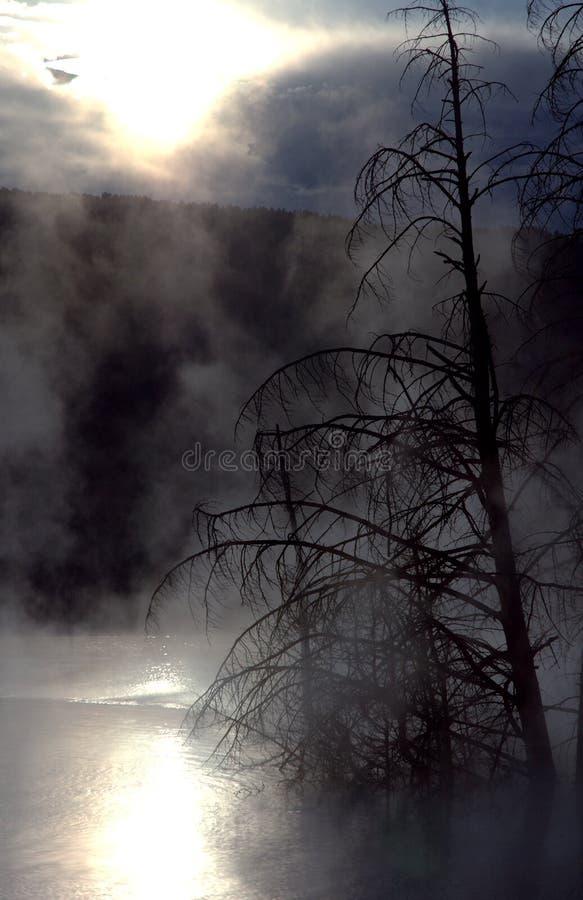 Árvores de encontro à névoa e ao nascer do sol foto de stock royalty free