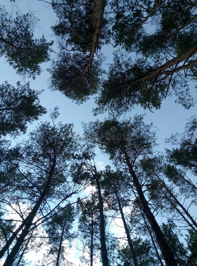Árvores de encontro ao céu imagem de stock royalty free