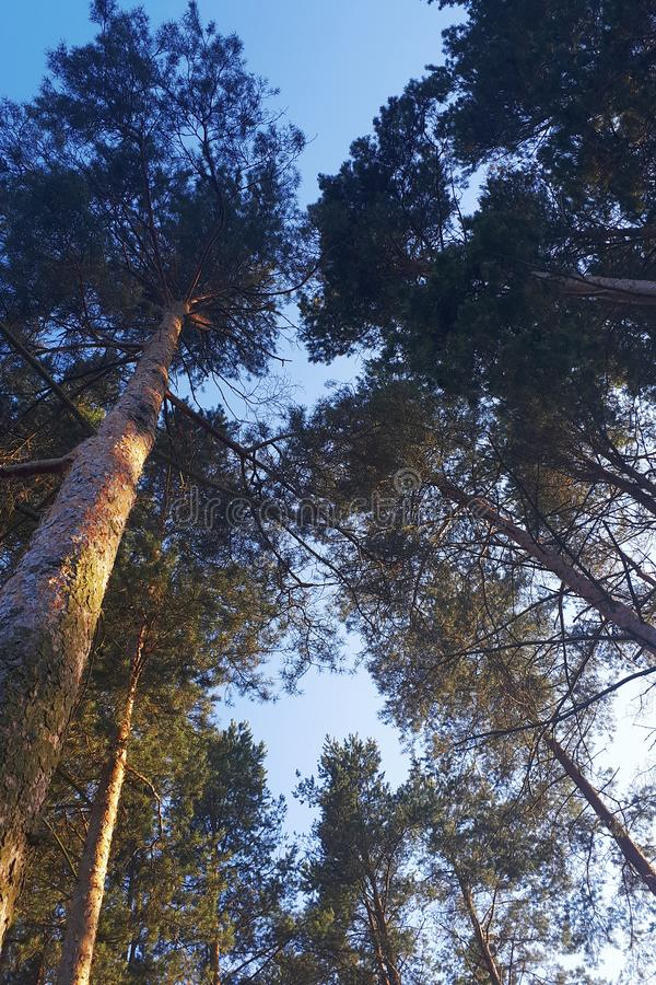 Árvores de encontro ao céu imagem de stock