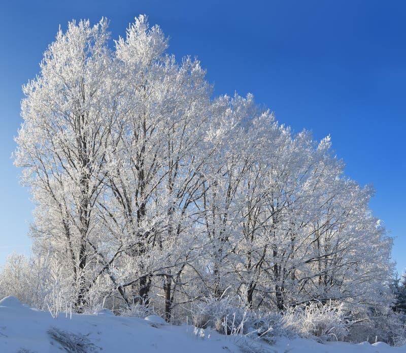 Download Árvores De Encontro Ao Céu Azul Imagem de Stock - Imagem de outdoors, estação: 12805049