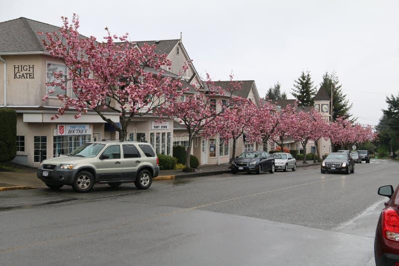 Árvores de florescência cor-de-rosa fotografia de stock