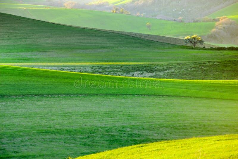 Árvores de florescência da mola branca em um fundo de um monte verde fotos de stock royalty free