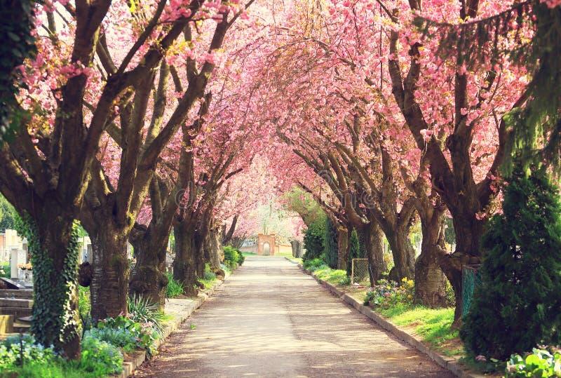 Árvores de florescência na mola imagens de stock royalty free