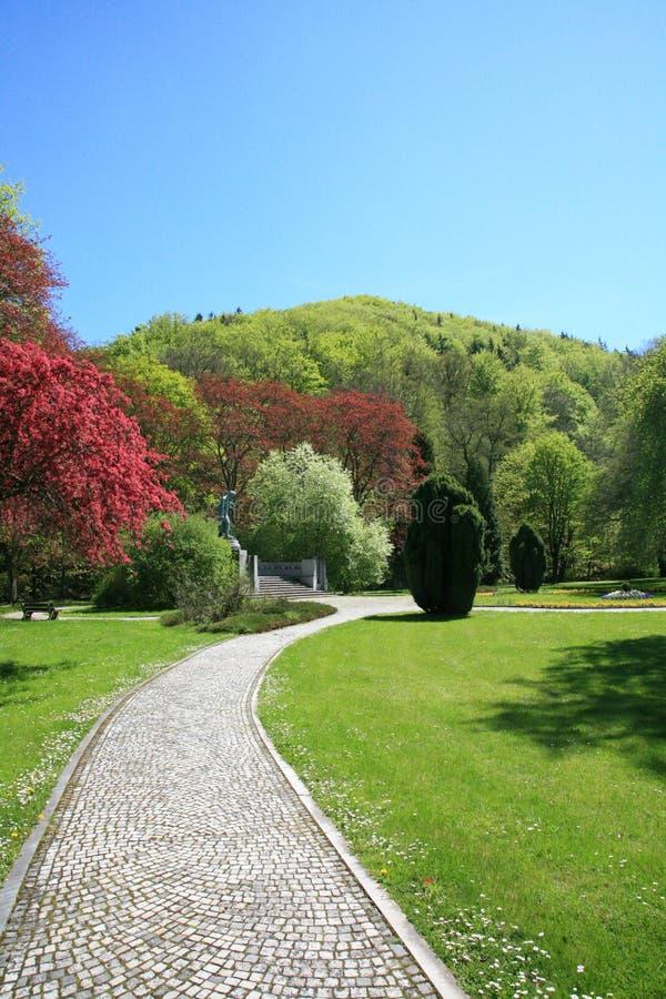 Árvores de florescência no parque de encontro ao céu azul fotos de stock royalty free