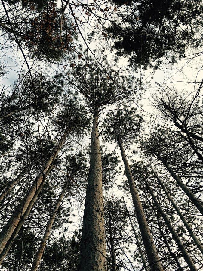 Árvores de floresta imagens de stock