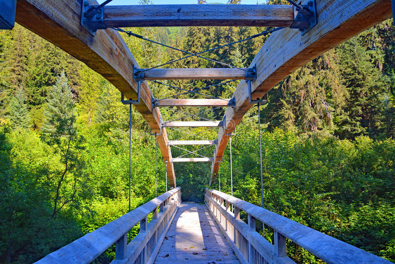 Árvores de floresta de madeira da ponte de suspensão do Columbia Britânica de Canadá imagem de stock