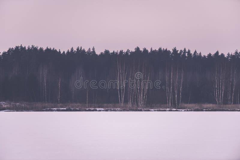 árvores de floresta despidas congeladas na paisagem nevado - EFF retro do vintage imagens de stock