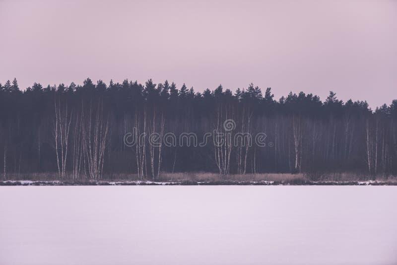 árvores de floresta despidas congeladas na paisagem nevado - EFF retro do vintage fotografia de stock royalty free