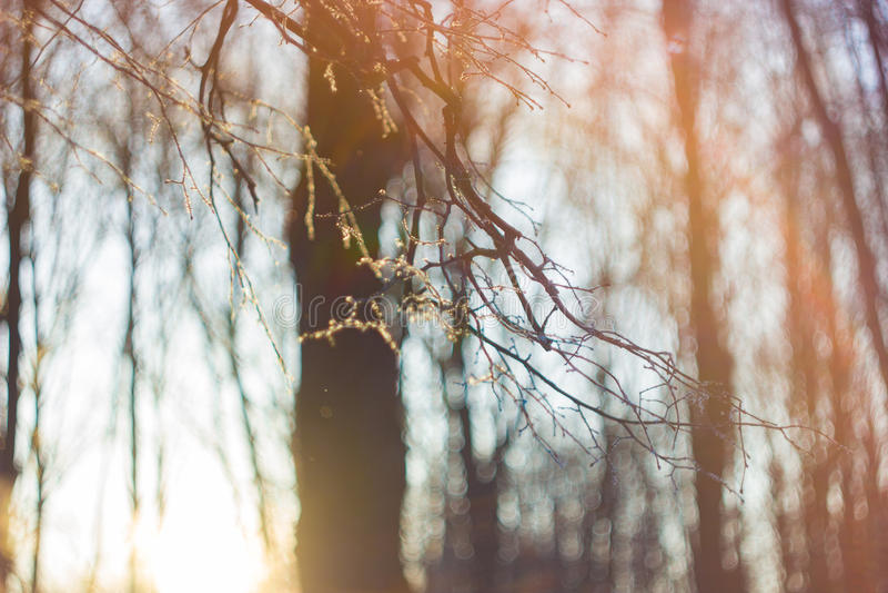 Árvores de floresta do inverno na neve imagem de stock royalty free