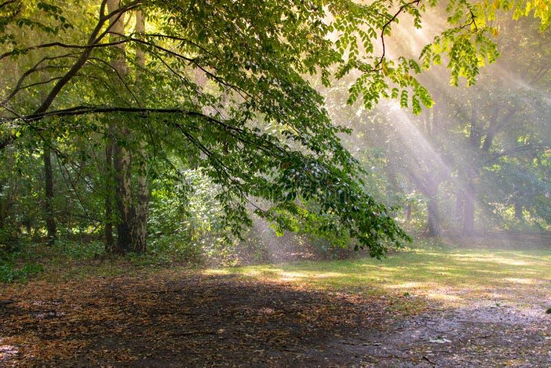 Árvores de floresta do outono Fundos de madeira verdes da luz solar da natureza imagens de stock royalty free