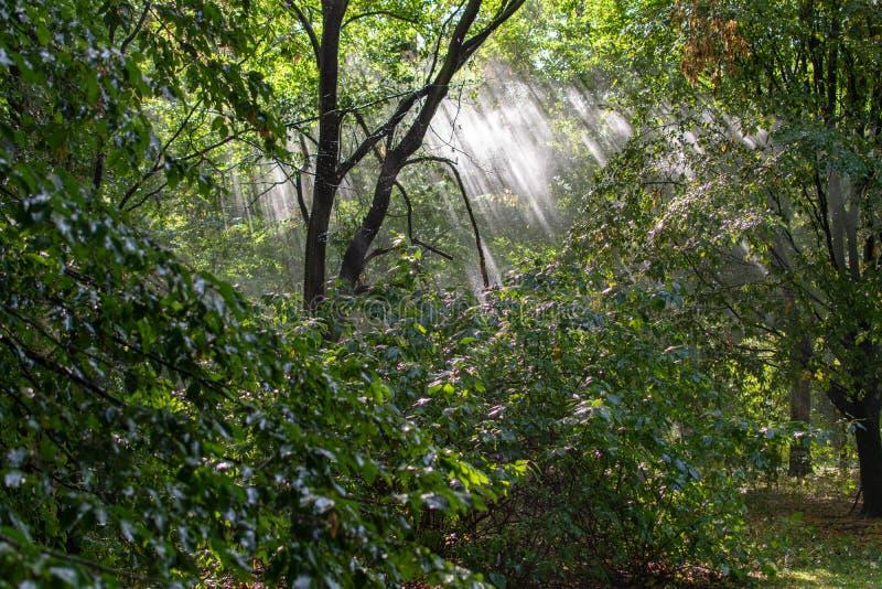 Árvores de floresta do outono Fundos de madeira verdes da luz solar da natureza foto de stock royalty free