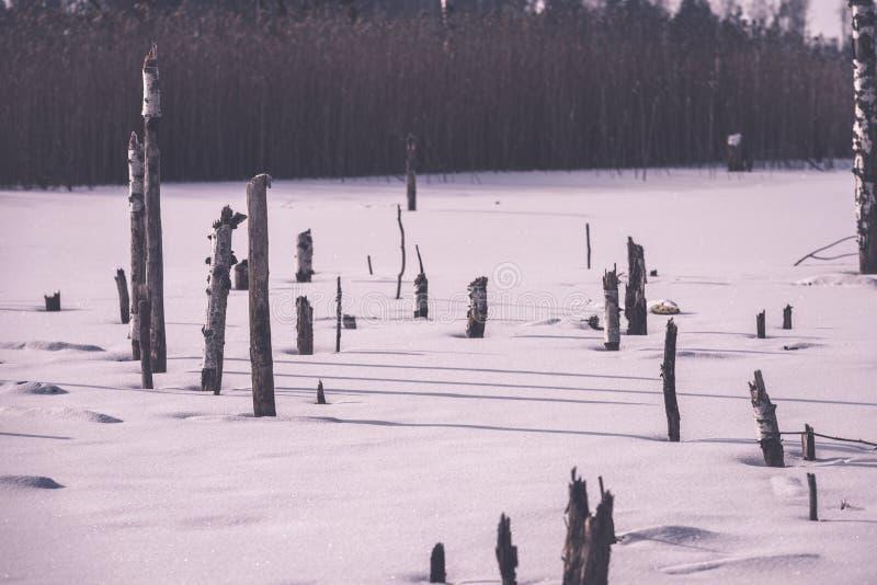 árvores de floresta secas e inoperantes despidas congeladas na paisagem nevado - vint imagem de stock