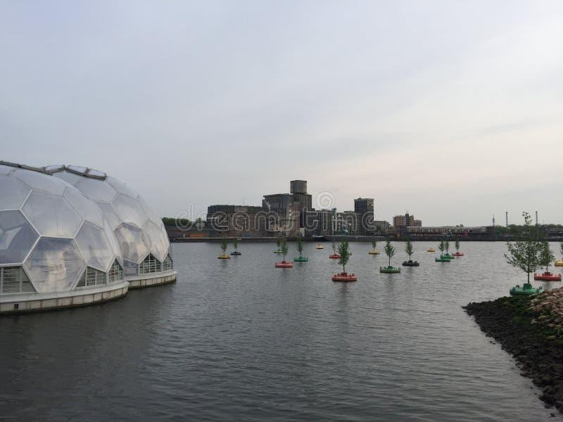 Árvores de flutuação do porto de Rotterdam fotos de stock