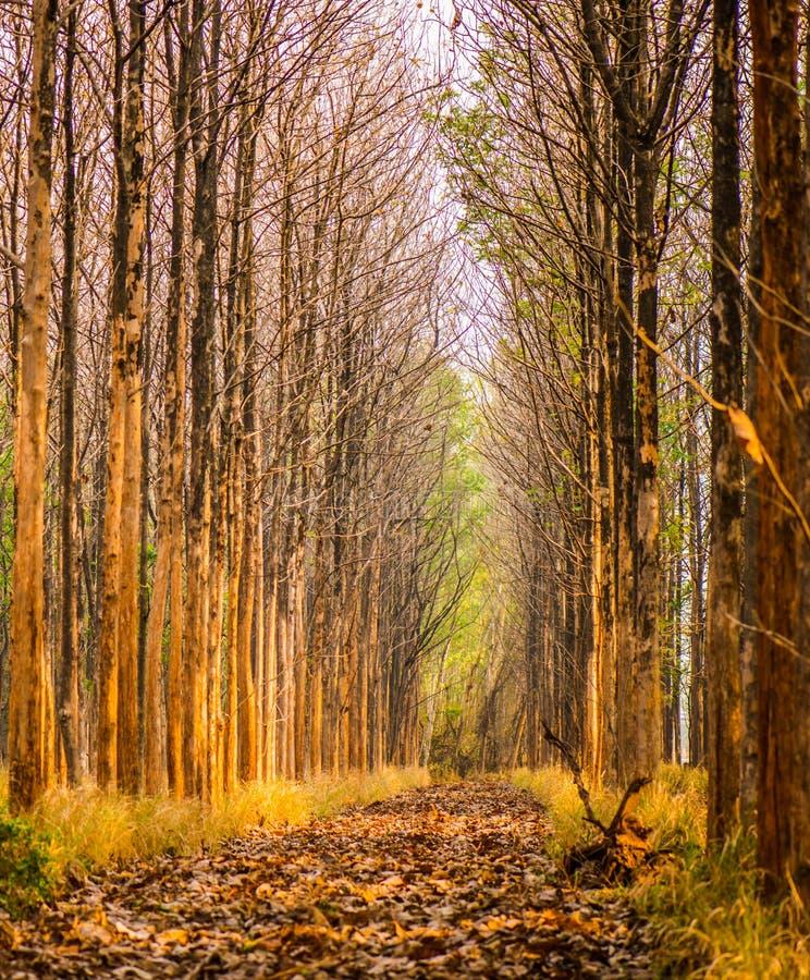 Árvores de folhas mortas imagem de stock