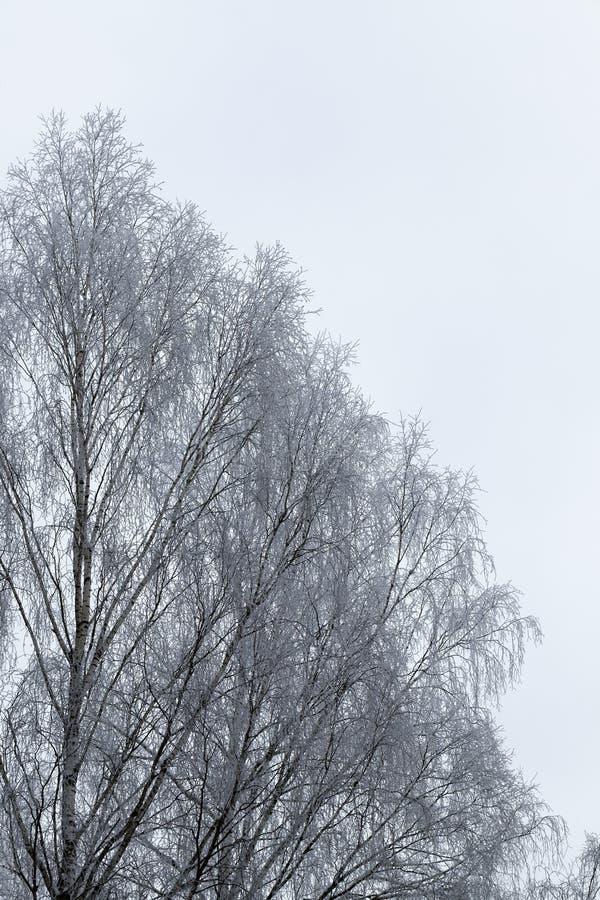 Árvores de folhas mortas desencapadas foto de stock royalty free