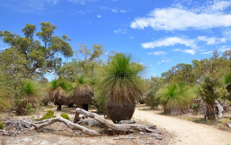 Árvores de grama: Australiano Bushland imagem de stock