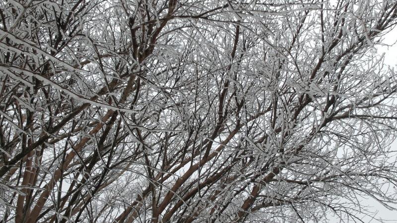 Árvores de Icey no inverno fotos de stock