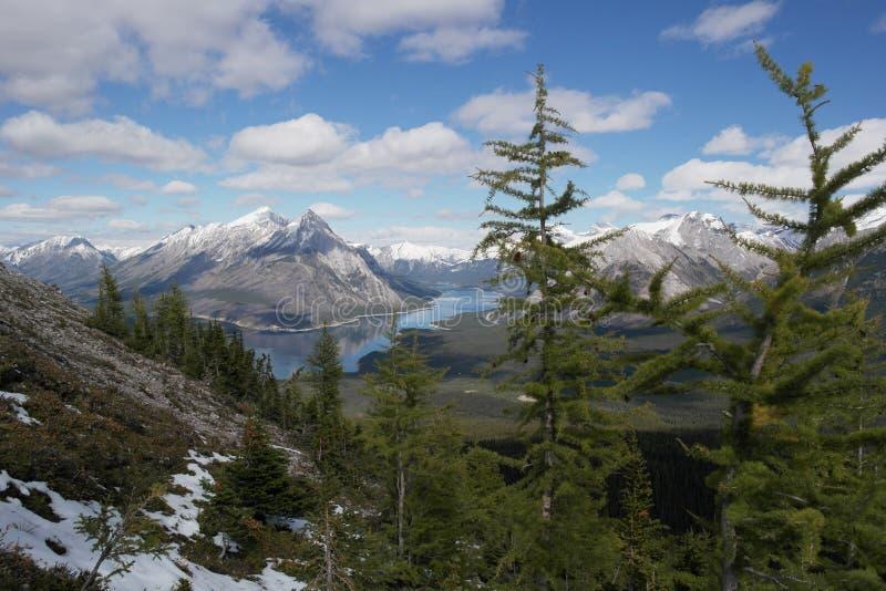 Árvores de larício nas montanhas rochosas com fundo do lago imagem de stock