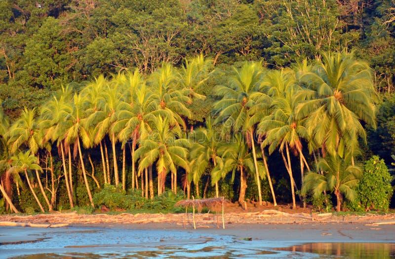 Árvores de palmas no por do sol fotos de stock royalty free