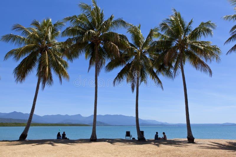 Árvores de Palmeiras do Porto Tropical de Douglas Queensland foto de stock royalty free
