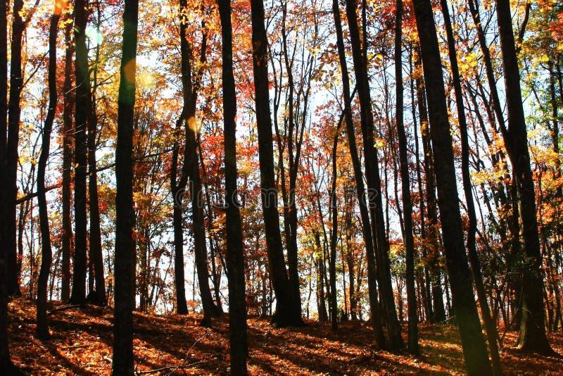 Árvores de pedra do parque estadual da montanha foto de stock