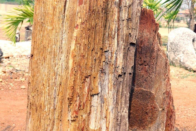 Árvores de pedra, floresta hirto de medo, madeira hirto de medo, fundo da imagem fotos de stock