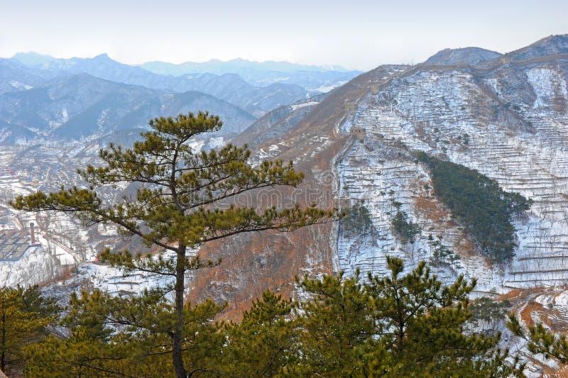 Árvores de pinho com fundo chinês do Grande Muralha foto de stock