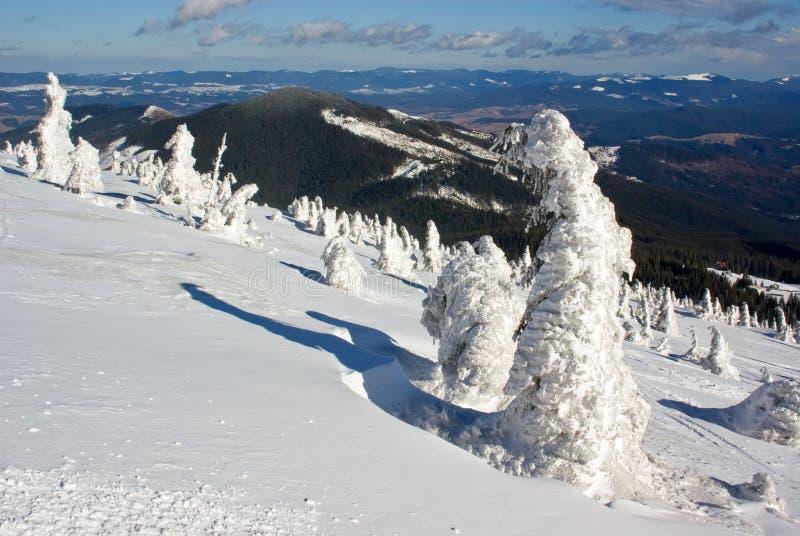 Árvores de pinho geladas de encontro à paisagem da montanha fotos de stock royalty free