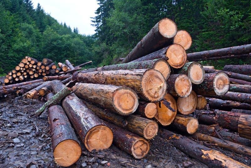 Árvores de pinho vistas fotos de stock royalty free