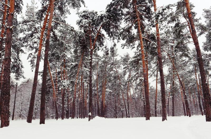 Árvores de Snowly na cidade grande imagens de stock royalty free