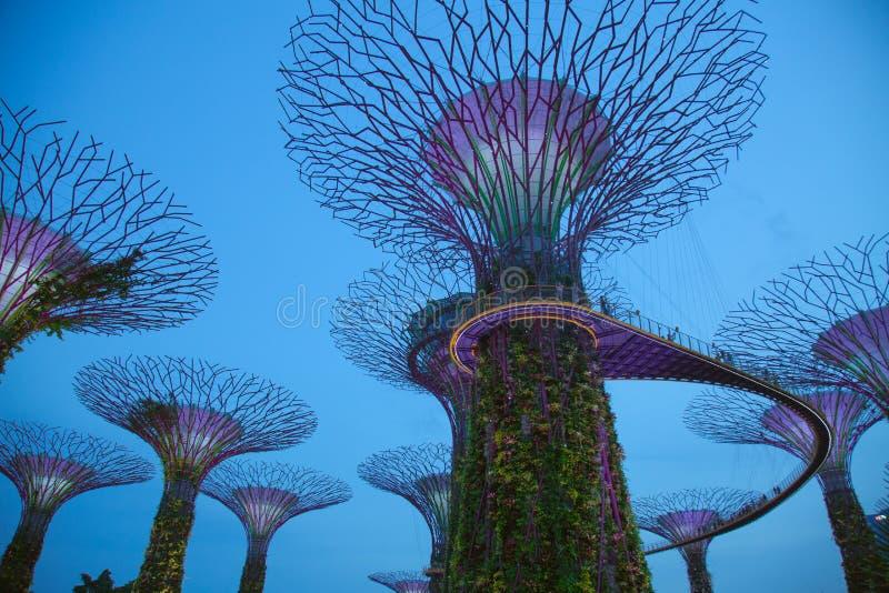 Árvores de Supergrove do Avatar durante o crepúsculo imagem de stock