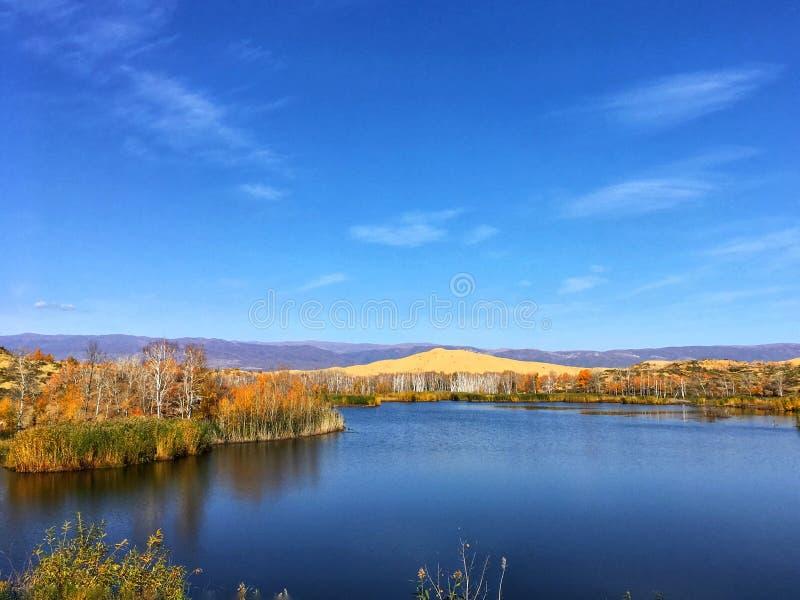 Árvores de vidoeiro branco coloridas pelo lago na queda imagens de stock