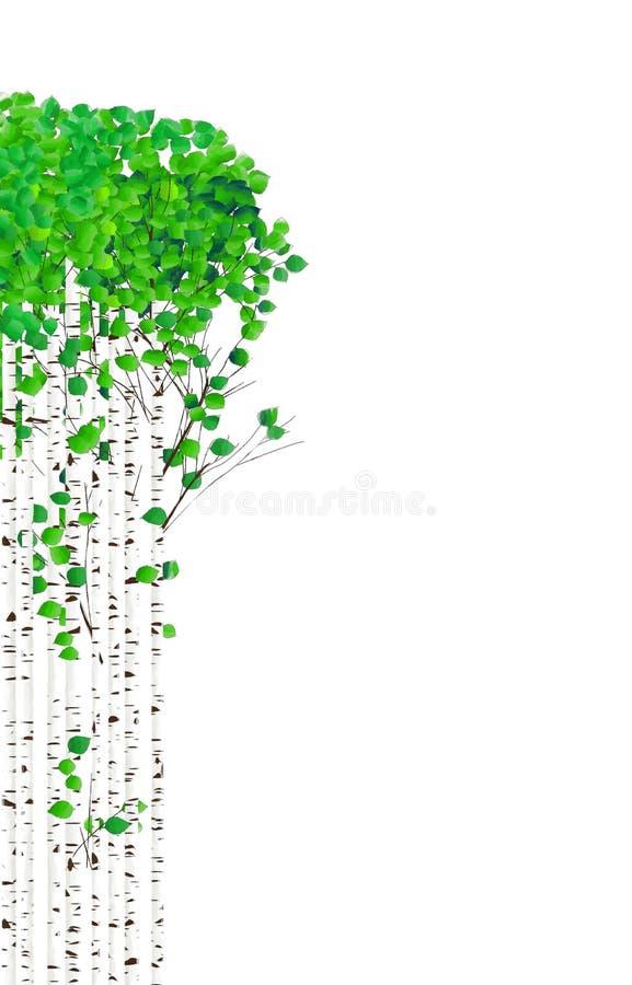 Árvores de vidoeiro da aquarela ilustração do vetor