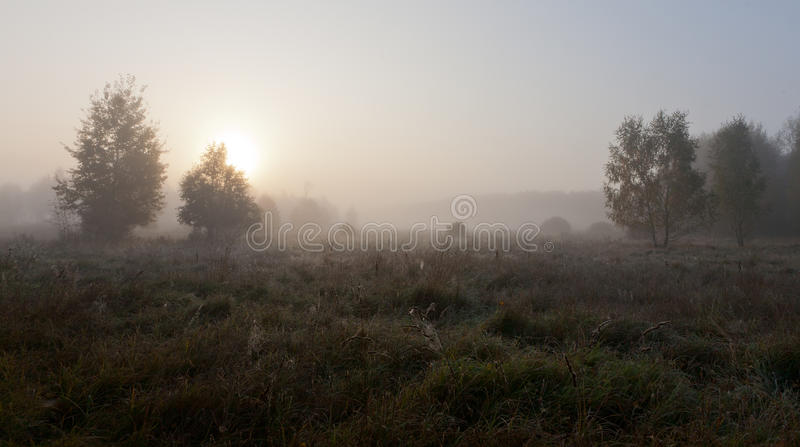 Árvore de vidoeiro na manhã enevoada contra a esfera do sol foto de stock royalty free