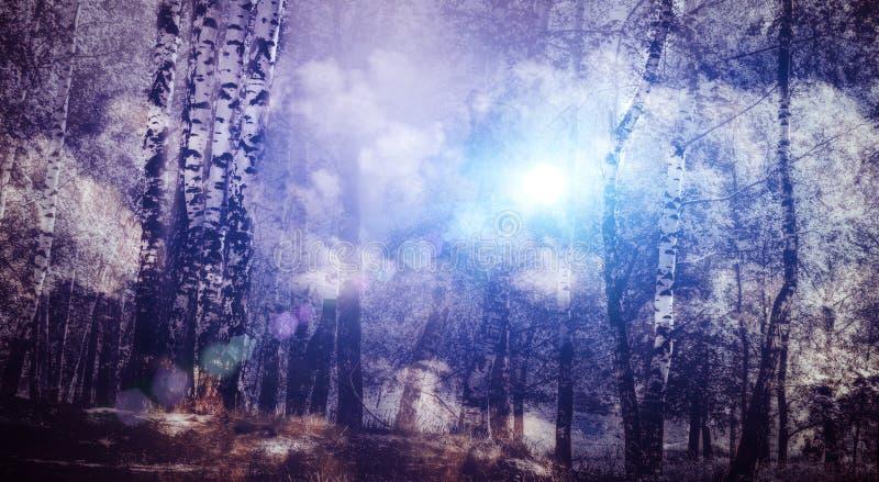 Árvores de vidoeiro nevoentas ilustração royalty free