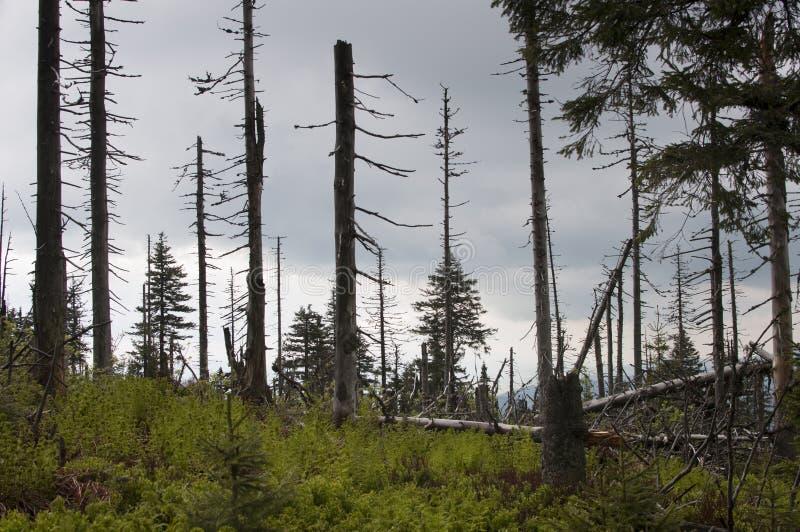 Árvores demulidas e inoperantes foto de stock
