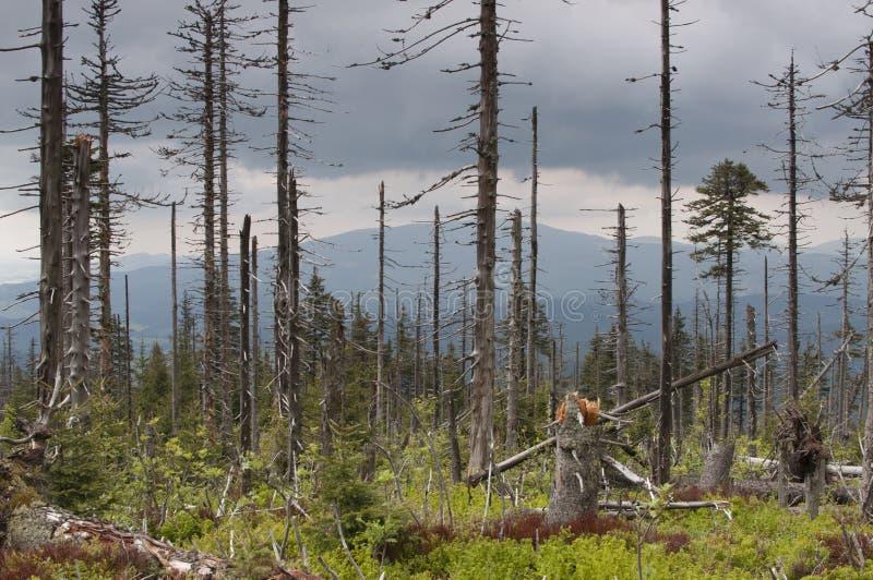 Árvores demulidas e inoperantes fotos de stock