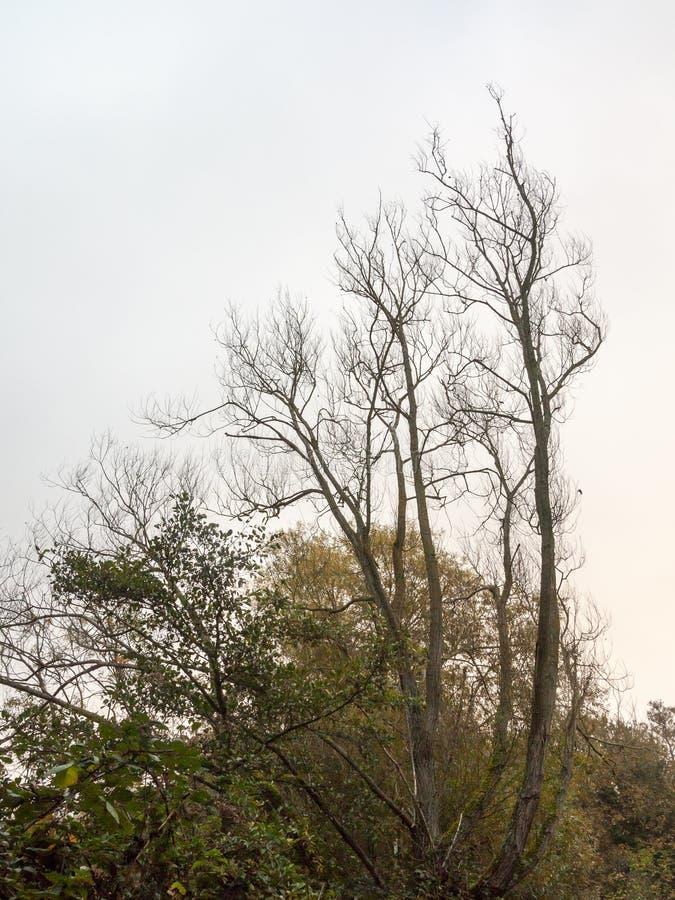 árvores desencapadas bonitas altas na natureza da paisagem do outono do céu fotografia de stock