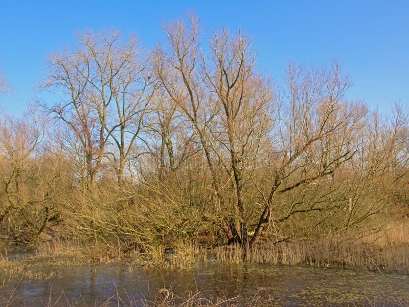 Árvores desencapadas e região selvagem de lingüeta na costa de uma associação congelada fotografia de stock royalty free