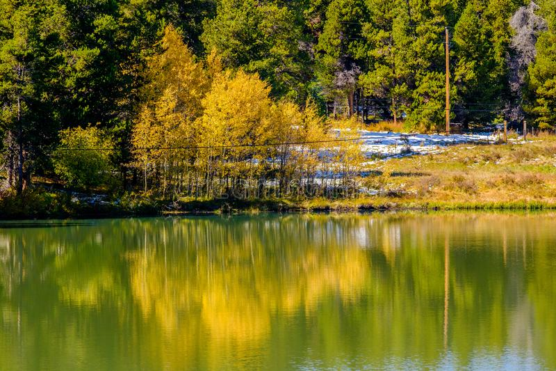 Árvores do álamo tremedor do outono em Colorado, EUA imagem de stock