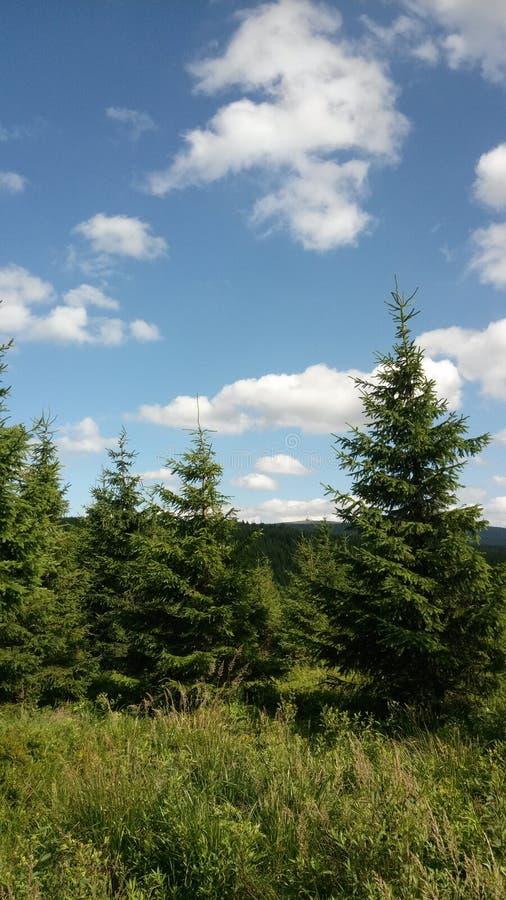 Árvores do abeto vermelho nas montanhas em Checo Republik fotos de stock royalty free