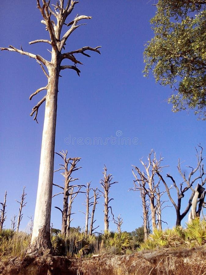 Árvores do céu azul da ilha fotografia de stock