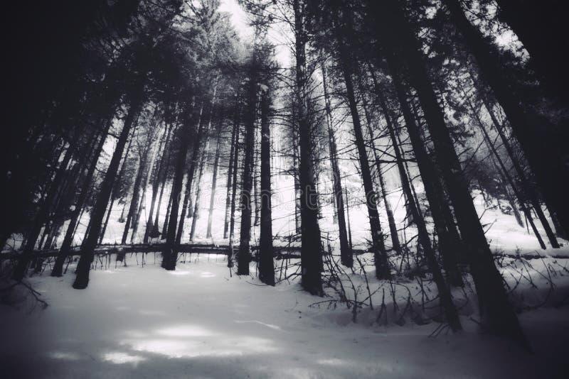 Árvores do código de barras fotografia de stock royalty free