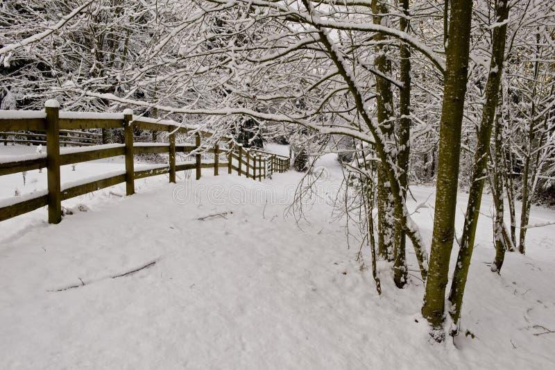 Árvores do cottonwood do inverno   imagem de stock