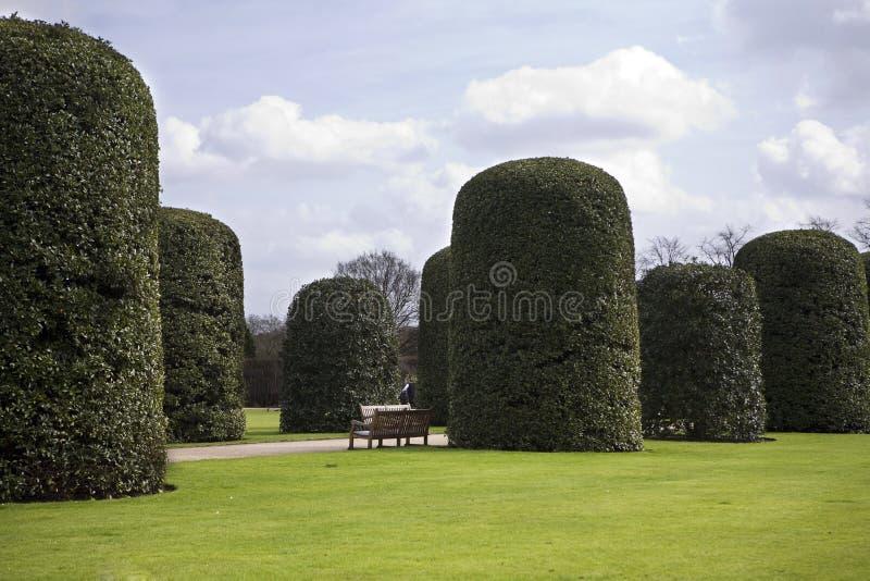 Árvores do descornado em Hyde Park foto de stock royalty free