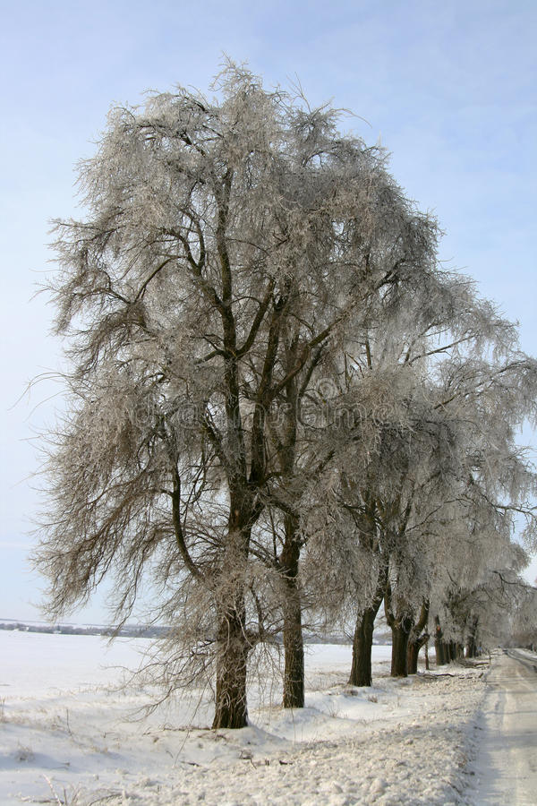 Download Árvores do gelo imagem de stock. Imagem de snowy, gelo - 12803699