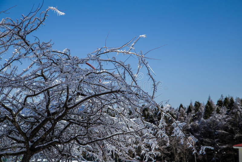Árvores do gelo fotos de stock royalty free