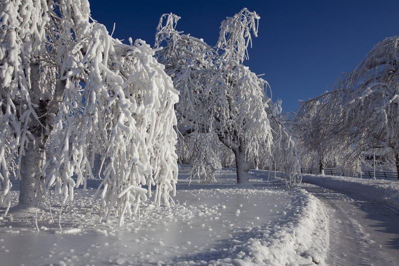 Árvores do gelo da escarcha de Niagara Falls fotos de stock